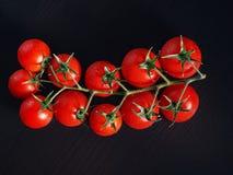 蕃茄分行  免版税图库摄影