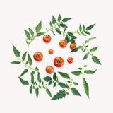 蕃茄和叶子的圆构成 库存照片