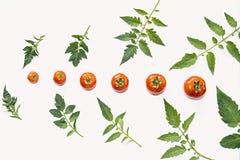 蕃茄和叶子的构成 免版税库存照片
