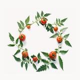 蕃茄和叶子的构成 库存照片