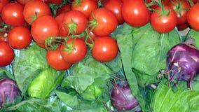 蕃茄和圆白菜 图库摄影
