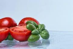 蕃茄和蓬蒿 图库摄影