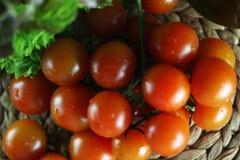蕃茄和蓬蒿 免版税库存照片