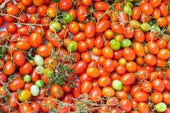 蕃茄在一个市场上在巴勒莫 库存图片