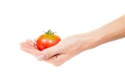 蕃茄在妇女手上 库存图片