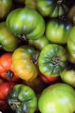 蕃茄在西西里岛 免版税库存照片
