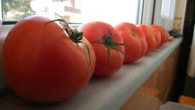 蕃茄我 图库摄影