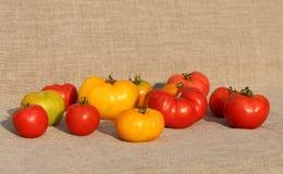蕃茄收获 免版税库存图片