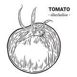 蕃茄新鲜食品手拉的例证,图画, engra 皇族释放例证