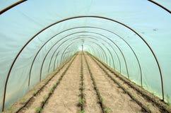 蕃茄温室和庭院床  免版税图库摄影