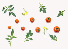 蕃茄的构成 免版税库存图片