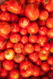 从蕃茄的背景 图库摄影