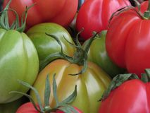 蕃茄的颜色 免版税图库摄影