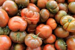 蕃茄红色成熟与在桌上的分支 免版税图库摄影