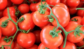 蕃茄红色成熟与在桌上的分支 免版税库存图片