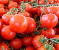 蕃茄红色成熟与在桌上的分支 库存图片