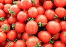 蕃茄红色成熟与在桌上的分支 免版税库存照片