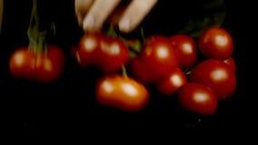 蕃茄红色成熟市场采摘 股票视频