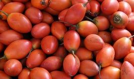 蕃茄结构树 免版税库存图片