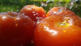 蕃茄自然在木倾吐的能量夏天水慢动作 影视素材