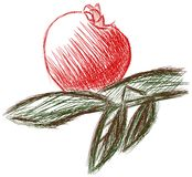 蕃茄被隔绝的剪影与蓬蒿的 皇族释放例证