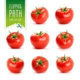 蕃茄设置与裁减路线 免版税库存图片
