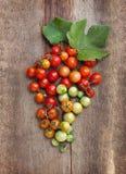 蕃茄,烹调用保存的草本在老木头 免版税库存图片