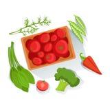 蕃茄,硬花甘蓝,与农场增长的Eco产品的菠菜新有机菜例证 免版税库存图片