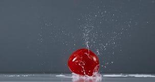 蕃茄,茄属lycopersicum,结果实落在水, 股票录像