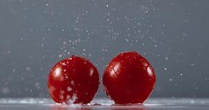 蕃茄,茄属lycopersicum,结果实落在水, 股票视频