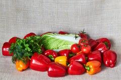 蕃茄,辣椒粉,北京圆白菜,荷兰芹,在一块灰色帆布的茴香 免版税库存图片