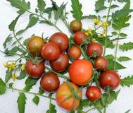 蕃茄,食物,菜,红色,蕃茄,新鲜,健康,绿色,有机,成熟,农业,植物,果子,樱桃,沙拉,菜 库存照片