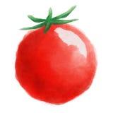 蕃茄水彩例证 库存照片