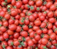 蕃茄结果实在市场上在台中,台湾 库存图片
