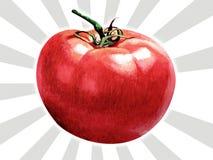 蕃茄 皇族释放例证