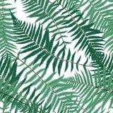 蕨叶子传染媒介蕨叶子传染媒介无缝的样式背景 免版税图库摄影