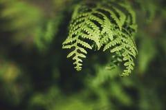 蕨叶子和植物在森林地 免版税库存图片
