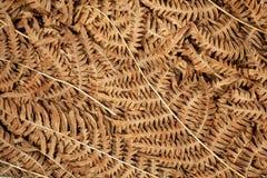 蕨叶子在背景的 森林植物的秋天叶子纹理  污染概念有害的环境人力的需要回收根土壤结构树 免版税库存图片