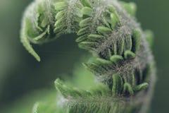 年轻蕨叶子宏指令 库存照片