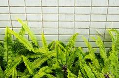 蕨叶子有瓦片纹理背景 免版税库存图片