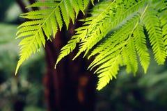 蕨叶子,选择聚焦 免版税库存照片