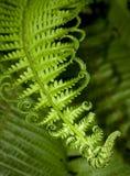 Fern leaf 库存照片