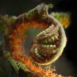 蕨叶状体 免版税图库摄影