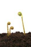 蕨叶状体 库存图片