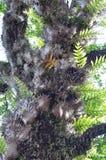蕨和寄生。 免版税库存照片