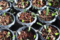蕨和饲养。 免版税库存照片