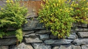 蕨和yelloy花在石墙上 免版税图库摄影
