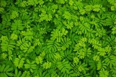 蕨在一个森林里在泰国 库存图片