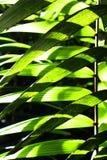 蕨在哥斯达黎加 库存照片