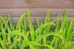 蕨在庭院里 免版税库存图片